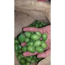Kalamata yeşil ham zeytin